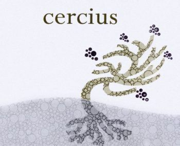Michel Gassier 2012 Cercius